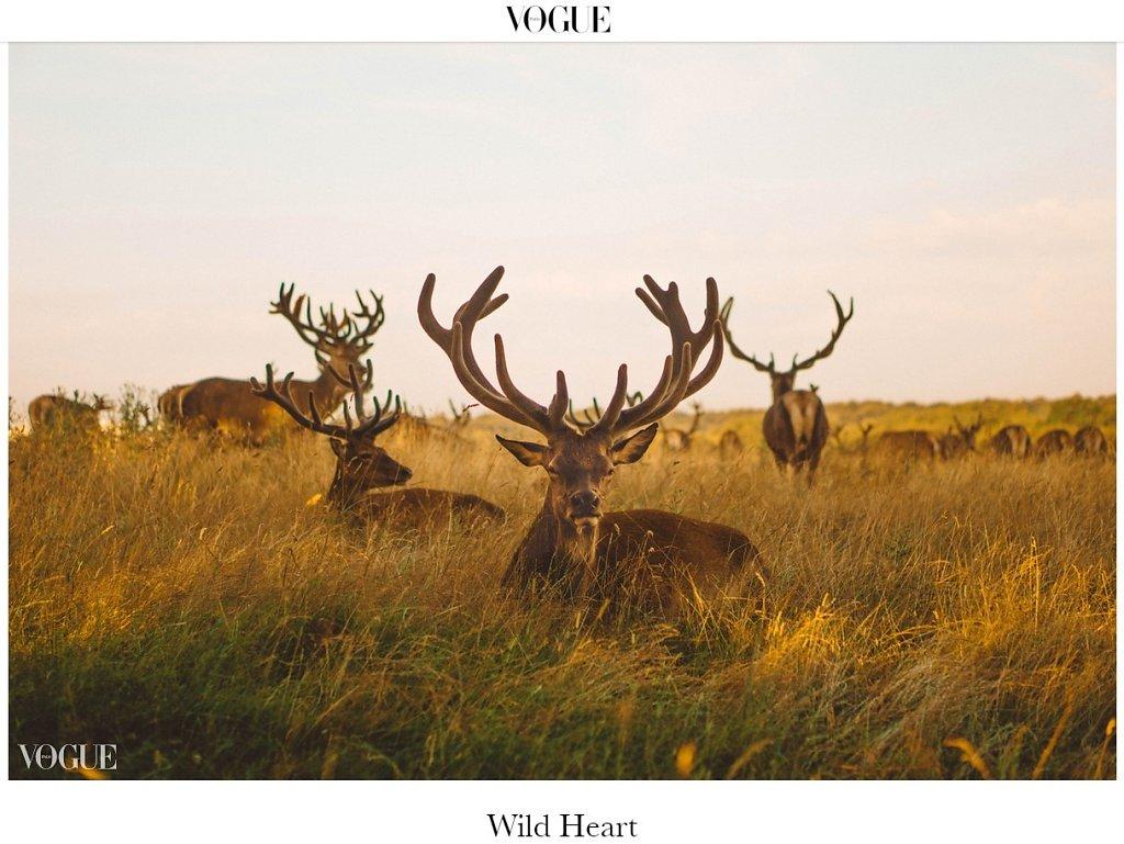 VOGUE ITALIA- WILD HEART